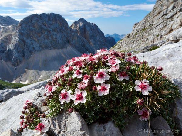 Julische Alpen - Triglav - Sieben Seen: Natur und Wandern mit Martin und Ulrike Sinzinger