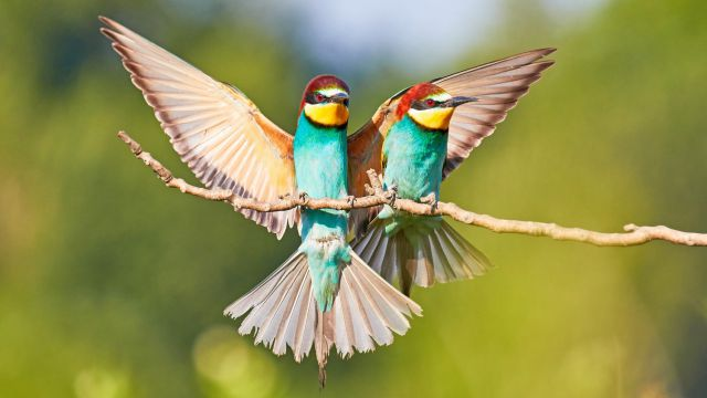 Fotografie im Friau: Vögel und Natur: Exkursion mit Martin Sinzinger