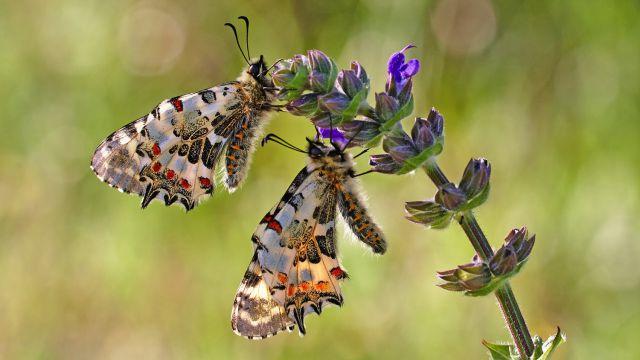 Naturfotografie Martin Sinzinger: Licht- und Lebensstudien