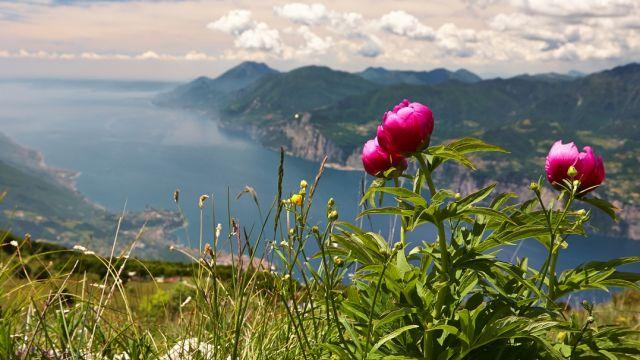 Monte Baldo - Gardasee:  Exkursion mit Martin Sinzinger