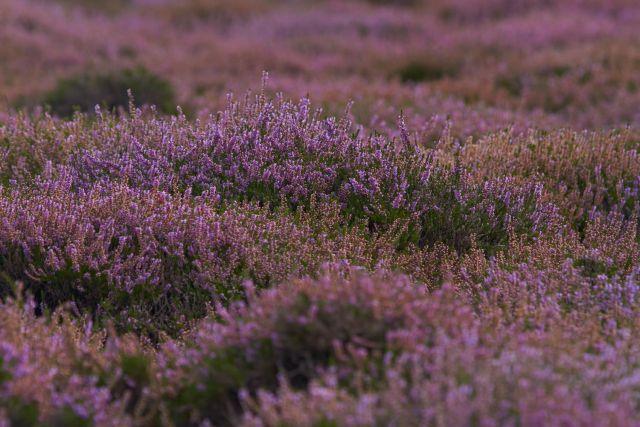 Westfriesische Nordsee-Insel Texel - Naturbegegnung Wanderreisen