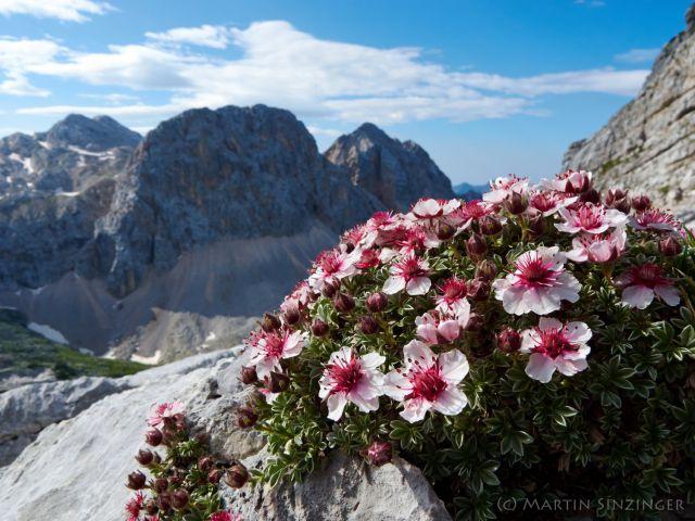 jul14_3wandern-in-den-julischen-alpen-mit-martin-und-ulrike-sinzinger_11238148753_o.jpg