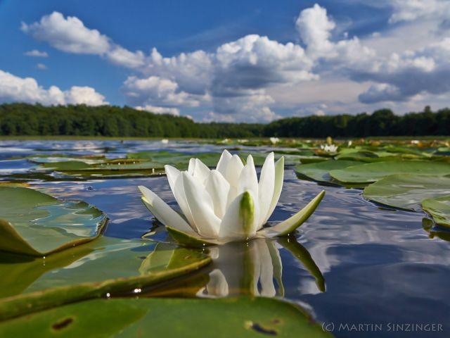 mvp_5naturbegegnung-wandern-naturerlebnis-und-naturfotografie-mit-martin-und-ulrike-sinzinger_11236246294_o.jpg